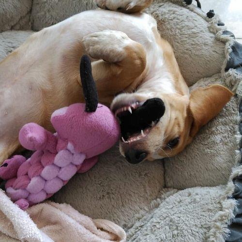 ana masoliver educacion canina cachorros llegada nuevo perro