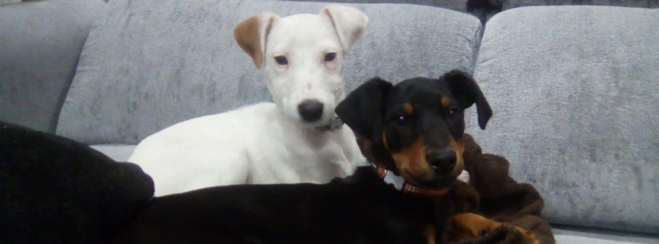 ana masoliver educacion canina cachorros