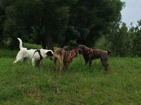 ana masoliver educacion canina clases socializacion cachorros 3