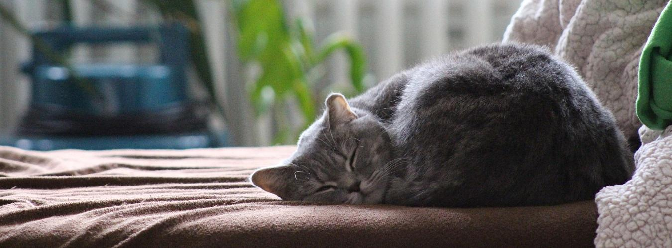 gato dormido adiestramiento canino ana masoliver
