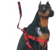 arnes dificulta el movimiento escapular perro adiestrador ana masoliver