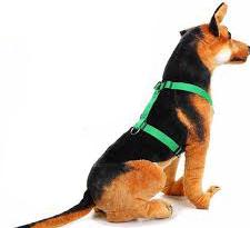 arnes h perro educacion canina ana masoliver