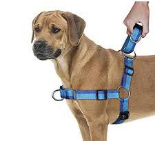 arnes perro anti tiro educacion canina ana masoliver