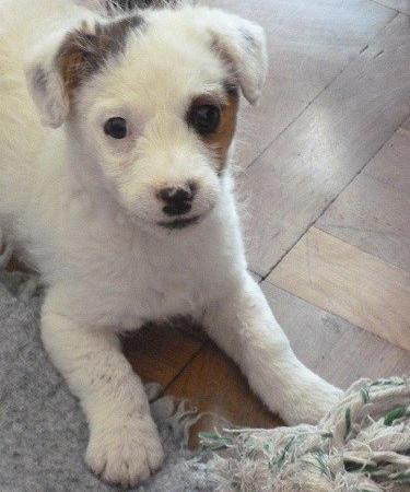 cachorro perro blanco adiestramiento canino san sebastian ana masoliver