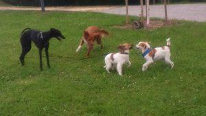cachorros jugando hierba adiestrador san sebastian ana masoliver
