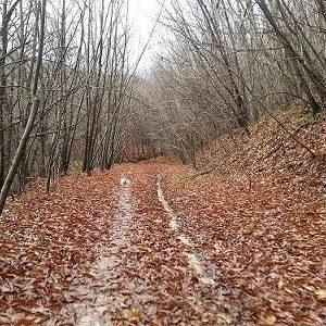 camino bosque otono adiestramiento canino ana masoliver