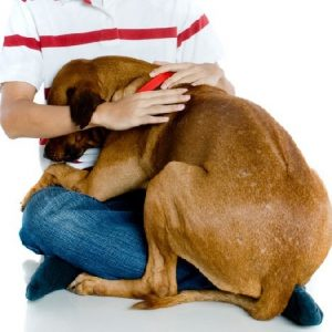 chico consuela perro miedoso educacion canina ana masoliver