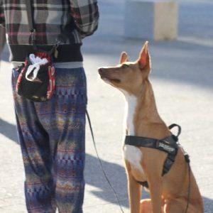 clase entrenando sentado perro san sebastian