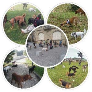 collage grupos de desarrollo educacion canina ana masoliver