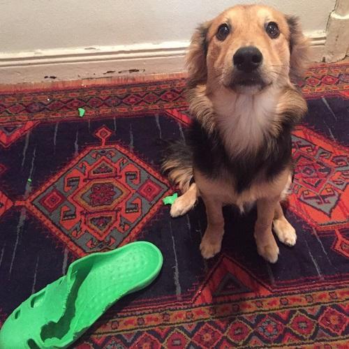destrozos en casa problemas de convivencia ana masoliver educacion canina servicios