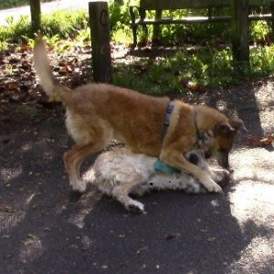 dominancia perros adiestrador canino san sebastian gipuzkoa