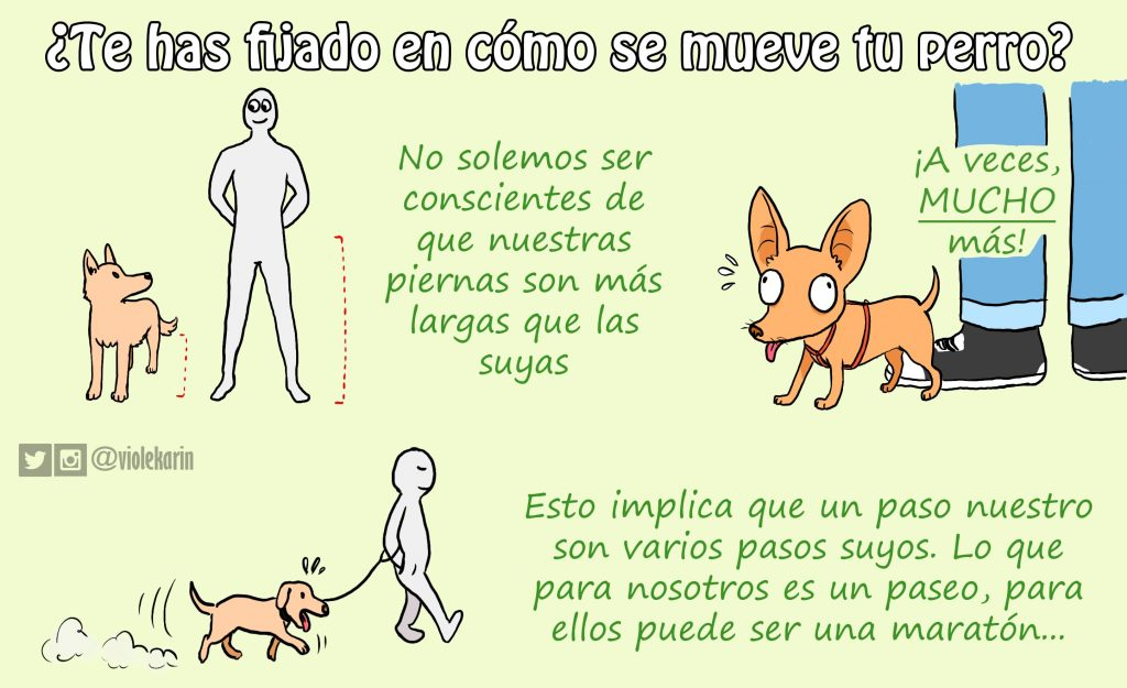 como se mueve perro educacion canina ana masoliver