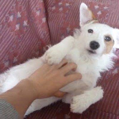 dueño rasca tripa perro adiestramiento ana masoliver