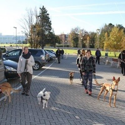 clases en grupo perros san sebastian educacion canina ana masoliver
