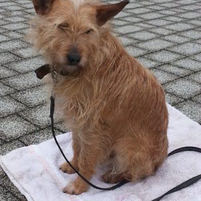 perro adoptado educacion canina ana masoliver
