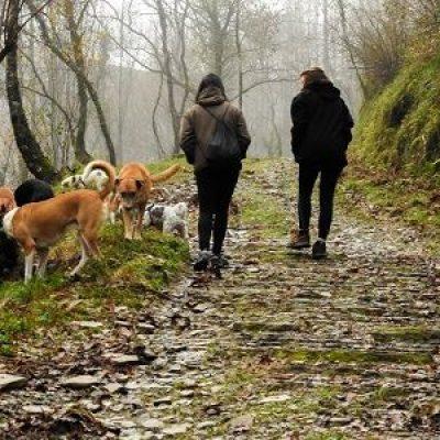 paseo perros bosque educacion canina ana masoliver