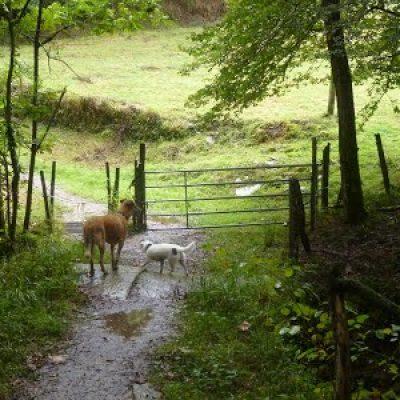 fotos perros paseo monte educacion canina ana masoliver