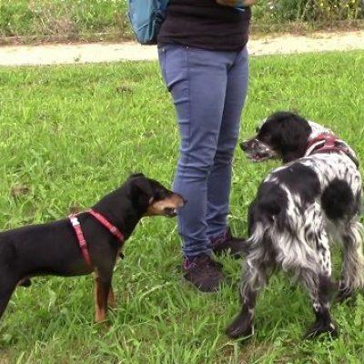 perro enseña dientes otro perro adiestrador gipuzkoa