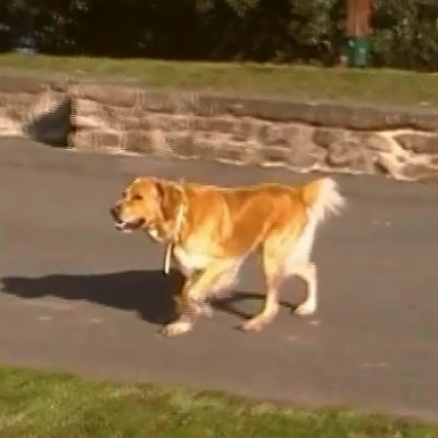 perro se aacerca desspacio parque san sebastian