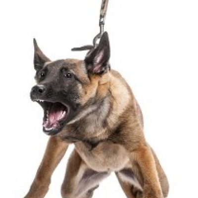 foto perro agresivo educacion canina ana masoliver