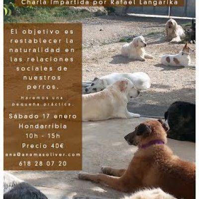 cartel seminario perros grupos sociales san sebastian
