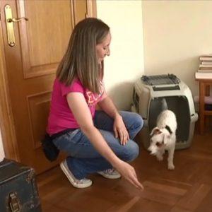habituacion cachorro transportin educacion canina ana masoliver
