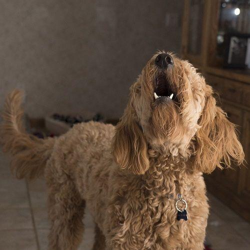 ladridos problemas de convivencia ana masoliver educacion canina servicios