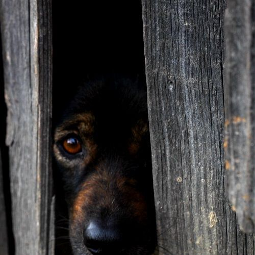 miedos problemas de convivencia ana masoliver educacion canina servicios