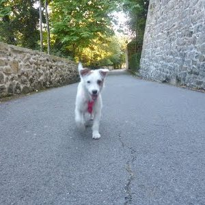 foto cachorro parque socializacion educacion canina ana masolivero Sansebastian