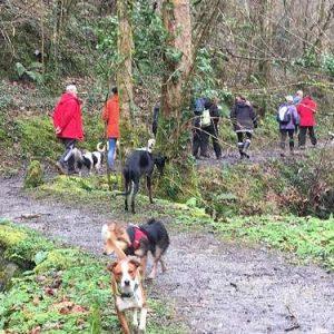 paseo socializacion perros bosque san sebastian