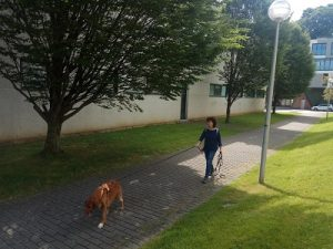 perro mantrailing adiestrador san sebastian ana masoliver