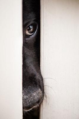perro miedoso escondido educacion canina ana masoliver