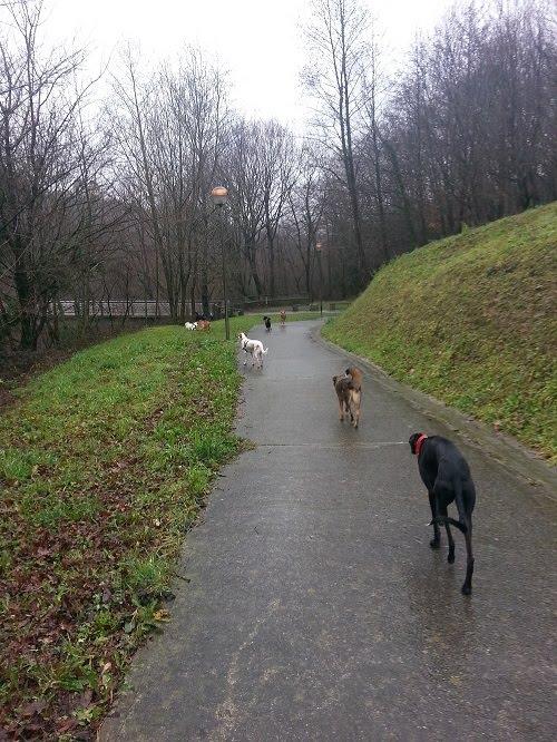 perros alejandose camino adiestrador gipuzkoa na masoliver