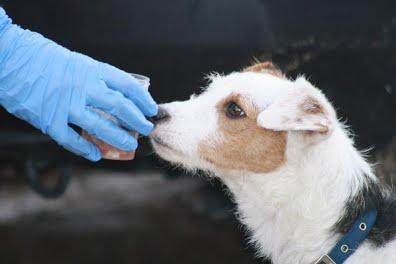 perro huele muestra curso busqueda grandes areas