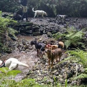 perros rio agua ana masoliver educacion canina paseos socializacion