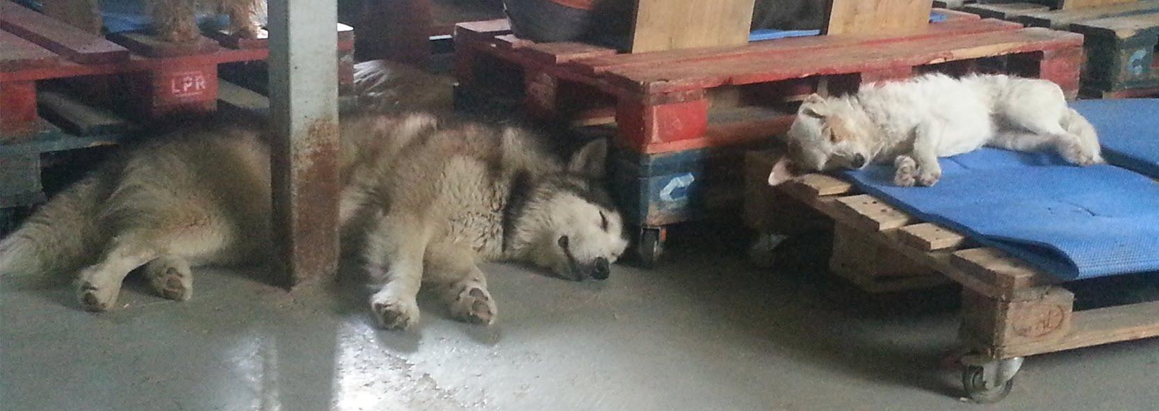 dos perros dormidos adiestrador san sebastian