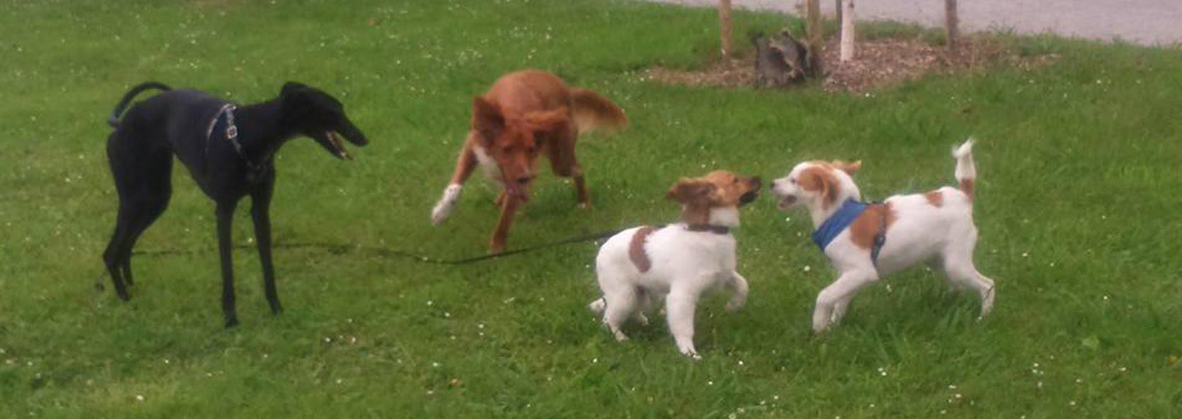 cachorros jugando educacion canina ana masoliver