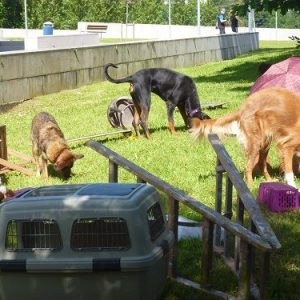 propiocepcion perros educacion canina ana masoliver