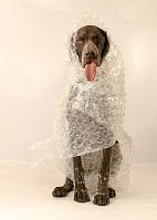 perro sobre protegido educacion canina ana masoliver