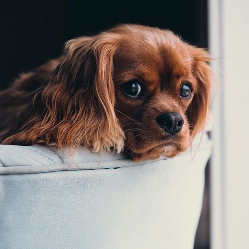 solo en casa problemas de convivencia ana masoliver educacion canina servicios