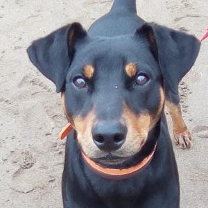 testimonio Miren y Thor clientes servicio grupos de desarrollo Ana Masoliver Educacion Canina